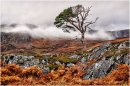 Lone Tree in Glen Affric
