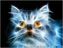 The Electric Cat