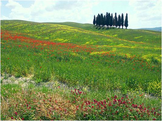 Tuscan Landscape 3