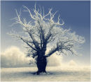 Wintry Tree 2