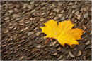 Autumnal Leaf on Money Log