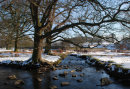 Bradgate Winter