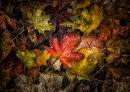 Natures Colours