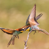 Bee-eater Attack