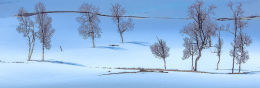 300. Winter Birches