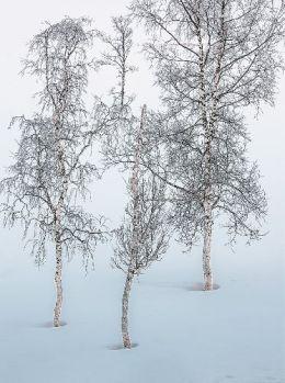 301-Vinterbjerk