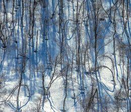 326-Vinterbjerker 3