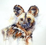 African Painted Dog 43x43cm