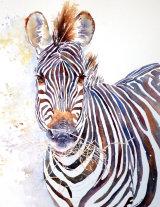 Crawshay's Zebra 50x35cm