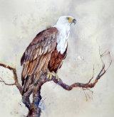 Fish Eagle 45x35cm