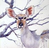 Kudu 45x35