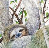 Three Toed Sloth 45x45cm