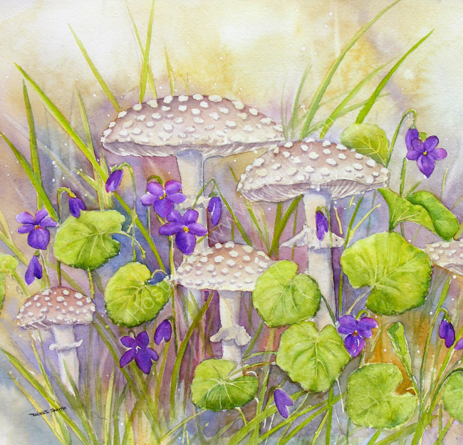 Toadstools and Wild Violets 27x32cm