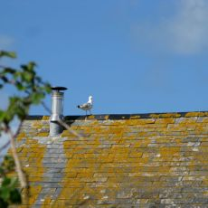 Gull on The Barn
