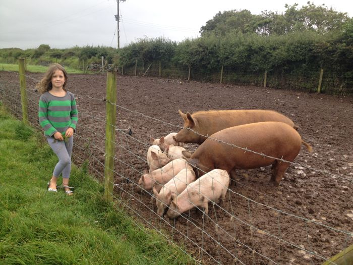 Matt's pigs