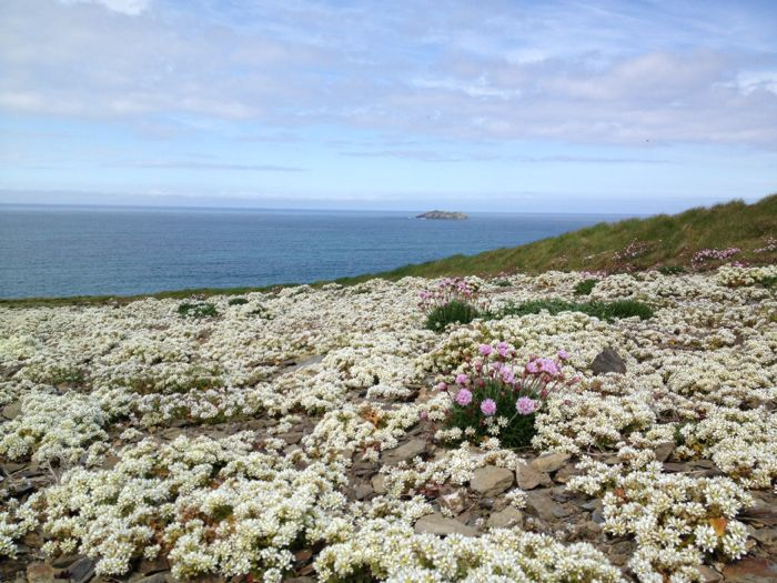 Walking the headland in spring