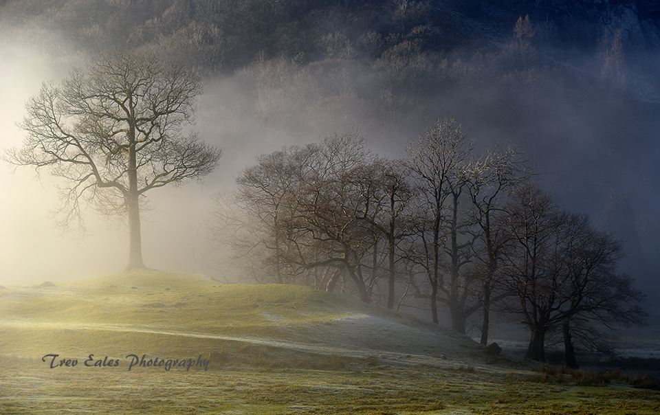 Trees in mist, Rydal