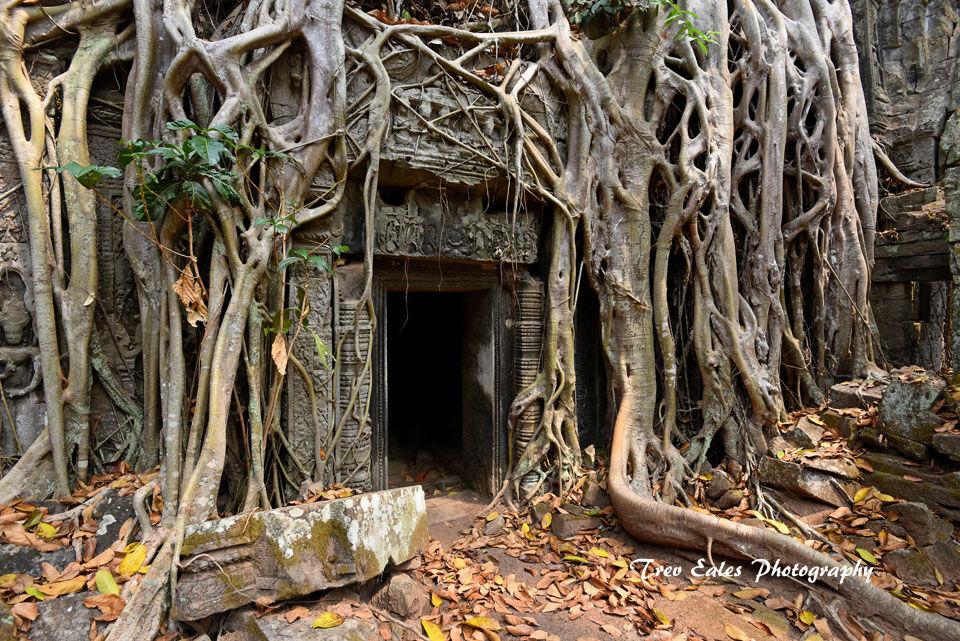 Jungle encroachment, Ta Prohm