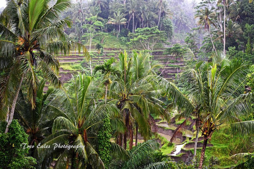 Tegalalang rice terraces in heavy rain