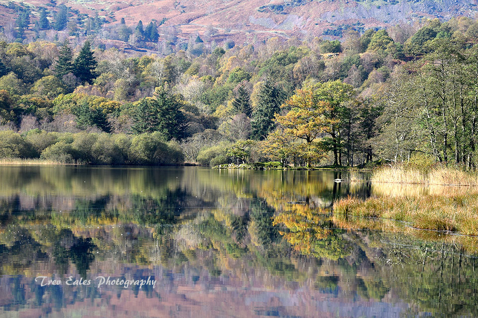 Early Autumn at Rydal