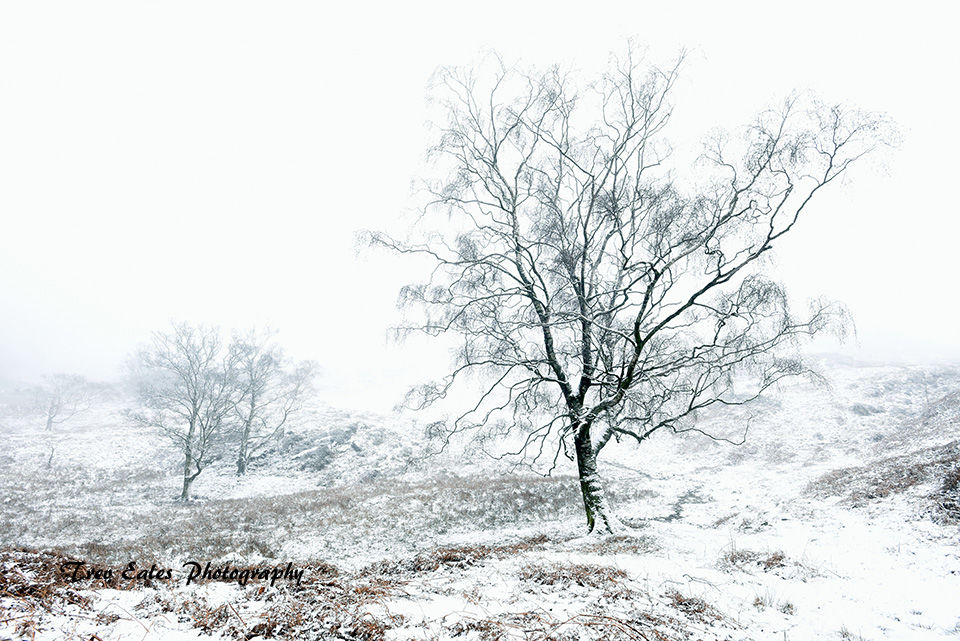 Winter Wonderland: Holme Fell.