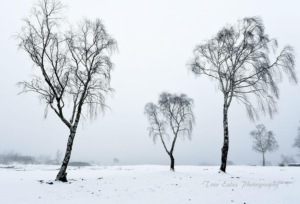 Winter Sentinals: Hodge Close.