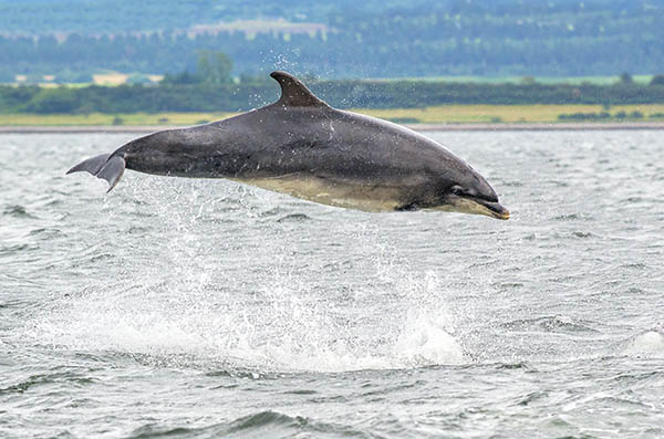 bottlenose dolphin image 1