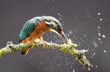 kingfisher image 3