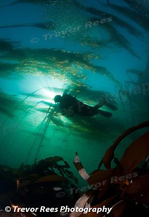 Diver & Kelp