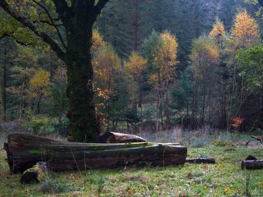 Holme Wood #3