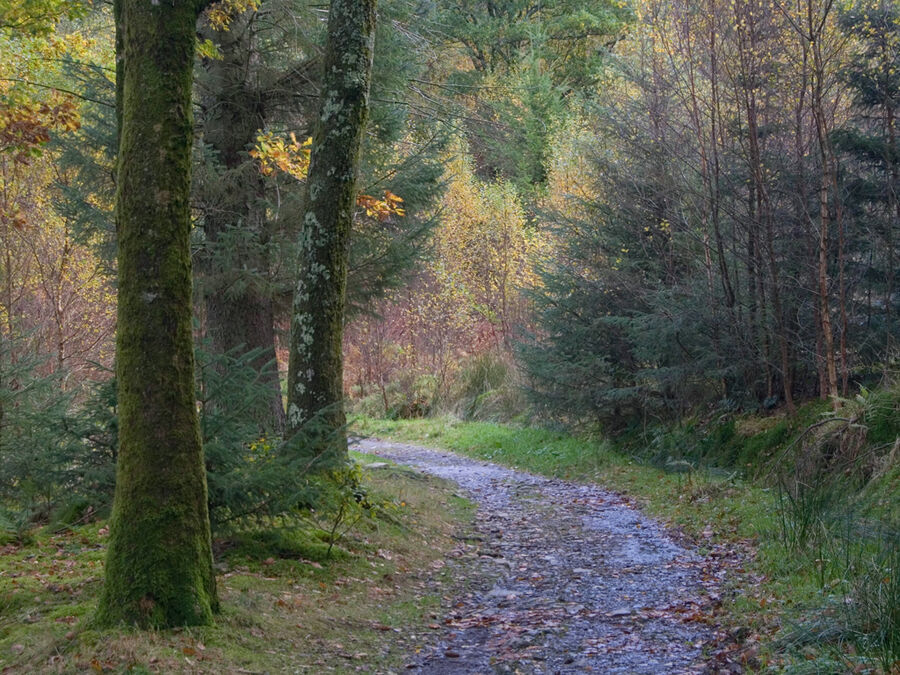 Holme Wood #5
