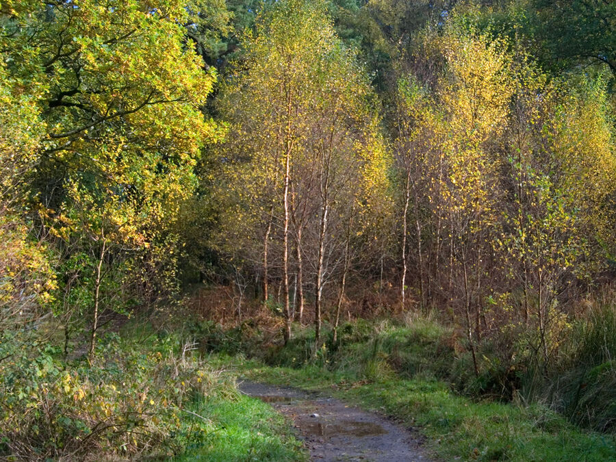 Holme Wood #6