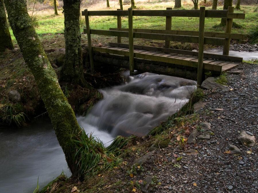 Holme Wood #7