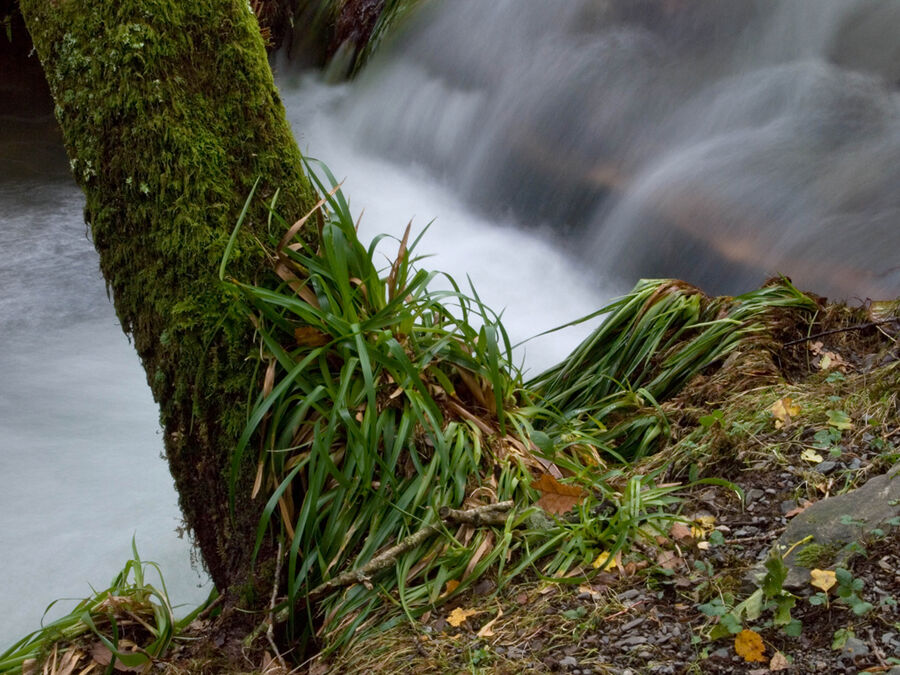 Holme Wood #8