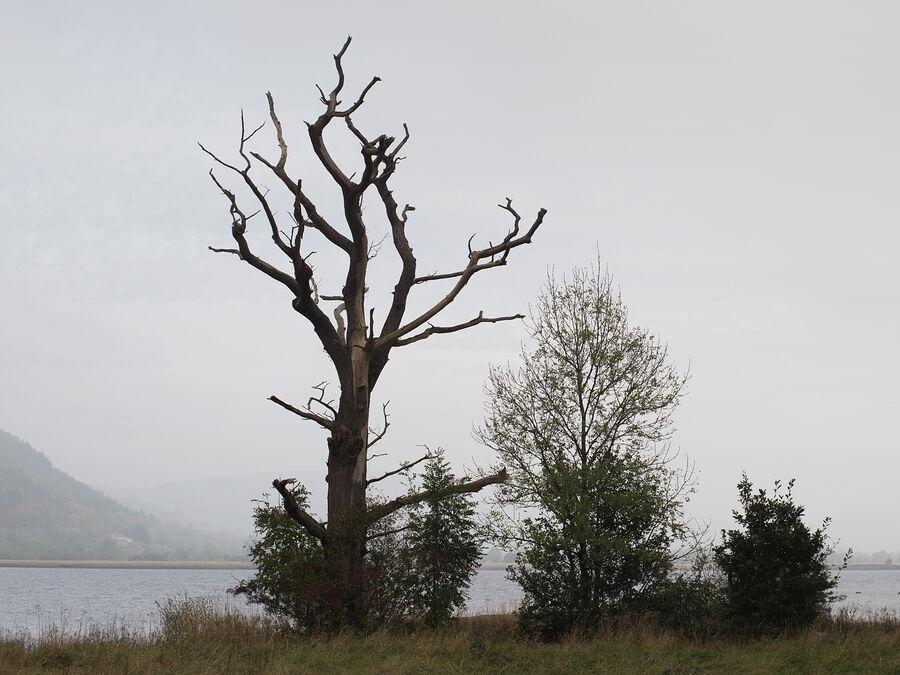 Bassenthwaite Lake #1