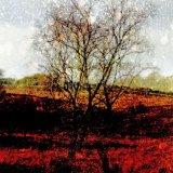 RABBIT'S TREE