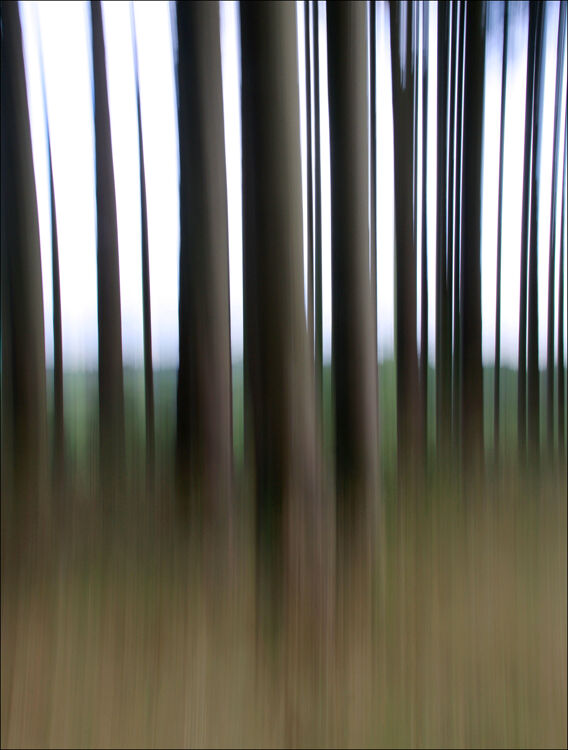 Movement in the woods