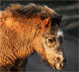Foal in sunlight