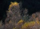 Last colour of Autumn