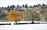 Autumn colour in winter