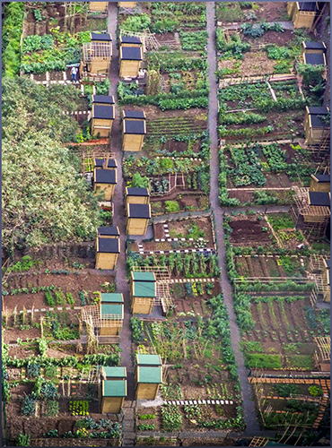 Levada allotments Funchal CP