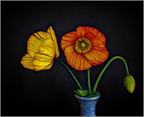 Bright poppies - Ian Ledgard