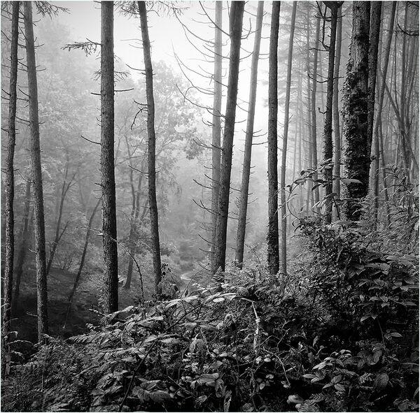 Misty morning, Brechfa - John Hufferdine