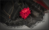 Scarlet and black - Mary Pipkin