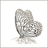 Butterfly - Mary Pipkin