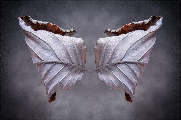 Papillon - Martin Smith