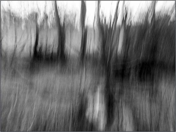 Trip in the forest - John Hufferdine