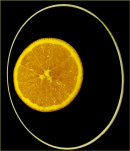 Orange elipse - Lynne Ball