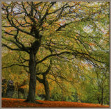 Painted beech trees - Ian Ledgard