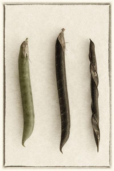 Seed pods - Mary Pipkin